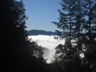 Camping in the Red Woods above the clouds.