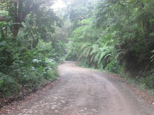 Taking the route through the jungle