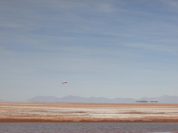 Flamingo for company