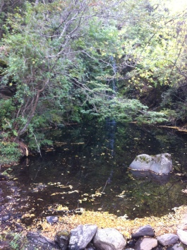 Even I could catch a fish here...30 trout in this tiny pond